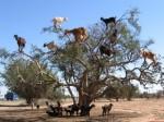 tree climbing, with aviv from the Centro de Cultivos Contemporaneos del Barrio in Poble Sec