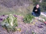 healthy chard, growing lettuces and the strawberries are there, promise!