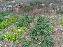 veggies :)